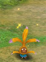 Orange Mystic Shrub