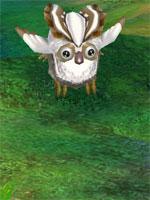 White Owlie