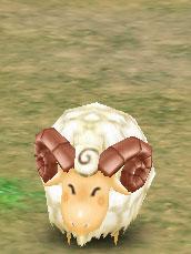 Cuddly Lamb