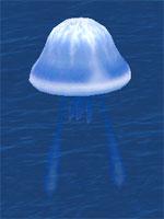 Thunder Sea Jelly
