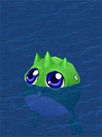 Big Eyed Polliwog