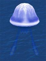Shocking Sea Jelly