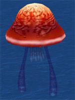 Grand Sea Jelly
